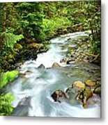 Downstram In The Olympics Metal Print