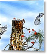 Downy And Titmouse Playing On Lichen Stump Metal Print