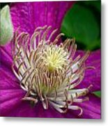 Dr. Seuss Flower No. 7636 And Bud Metal Print