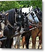 Draft Horses All In A Row Metal Print