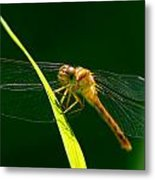 Dragon Fly On Grass Metal Print