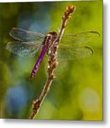 Dragon Fly Or Not Metal Print