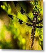 Dragonfly - Dragon Waiting Metal Print