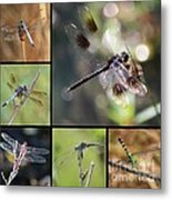 Dragonflies On Twigs Collage Metal Print