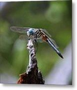 Dragonfly 02 Metal Print