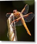 Dragonfly 1 Metal Print by Scott Gould