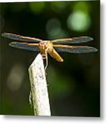 Dragonfly 2 Metal Print by Scott Gould