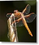 Dragonfly 3 Metal Print by Scott Gould
