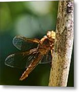 Dragonfly 5 Metal Print by Scott Gould