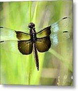 Dragonfly 9249 Metal Print