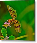 Dragonfly And Flower Metal Print