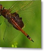 Dragonfly Art 2 Metal Print