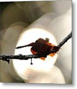Dragonfly Bathing In Sunset Metal Print