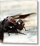 Dragonfly Close Up Metal Print