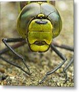 Dragonfly Close-up Metal Print