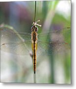 Dragonfly Closeup Metal Print
