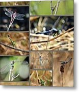 Dragonfly Collage Metal Print