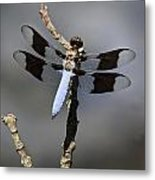 Dragonfly Common Whitetail Metal Print