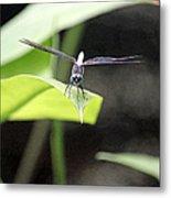 Dragonfly Dimensions Metal Print