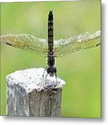 Dragonfly Doing A Handstand Metal Print