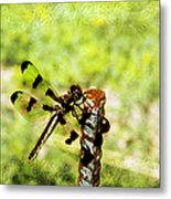 Dragonfly Eating Breakfast Metal Print