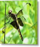 Dragonfly Female Widow Skimmer Metal Print