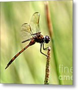 Dragonfly Gold Metal Print