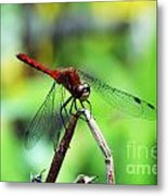 Dragonfly Hard At Work Metal Print
