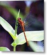 Dragonfly Hunt Metal Print