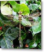 Dragonfly In An English Garden Metal Print
