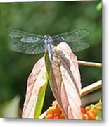 Dragonfly In Early Autumn Metal Print