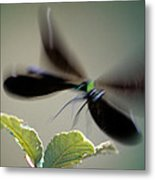 Dragonfly In Flight Metal Print