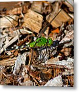 Dragonfly In Mulch Metal Print
