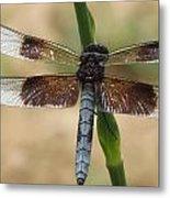 Dragonfly In Summer Metal Print
