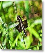 Dragonfly Ins 22 Metal Print