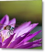 Dragonfly Macro On A Water Lily Metal Print