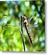 Dragonfly Magic Metal Print