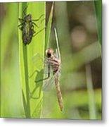 Dragonfly Metamorphosis - Tenth In Series Metal Print