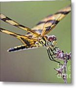 The Halloween Pennant Dragonfly Metal Print