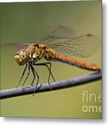 Dragonfly On A Wire Metal Print