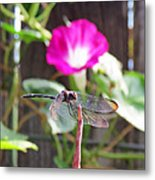 Dragonfly On Watch Metal Print by Walter Klockers