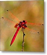 Dragonfly Paintings Metal Print