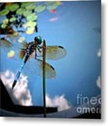 Dragonfly Reflecting On A Beautiful Day Metal Print