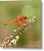 Dragonfly Resting Metal Print