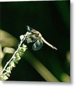Dragonfly Resting In The Wind  Metal Print