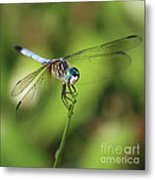 Dragonfly Square Metal Print