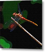 Dragonfly Waits Metal Print