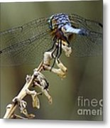 Dragonfly Wing Details Metal Print