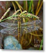 Dragonfly X-ray Metal Print