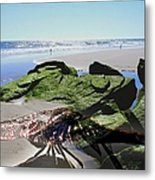 Dragonfly's Day At The Beach Metal Print